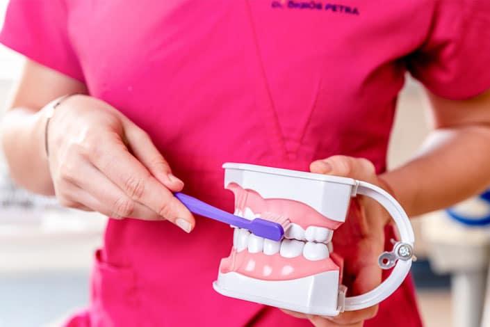 Dr. Ökrös Petra bemutatja a fogkefe helyes használatát.