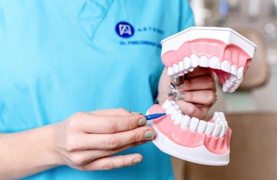 Dr. Friedreich Dóra bemutatja a fogköztisztító kefe helyes használatát.