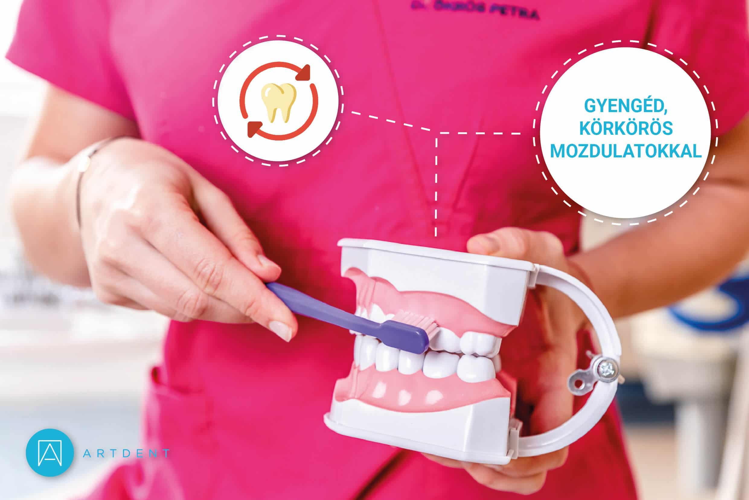 Dr. Ökrös Petra mutatja, hogy apró, körkörös mozdulattal mossunk fogat.